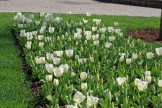 istanbul_tulip_festival_lale (10)