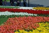 istanbul_tulip_festival_lale (17)