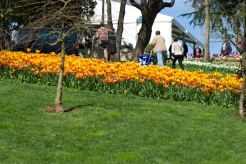 istanbul_tulip_festival_lale (20)