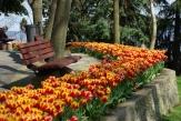 istanbul_tulip_festival_lale (21)