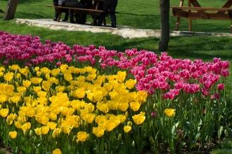 istanbul_tulip_festival_lale (24)