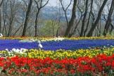 istanbul_tulip_festival_lale (26)