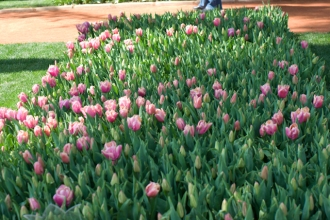 istanbul_tulip_festival_lale (3)