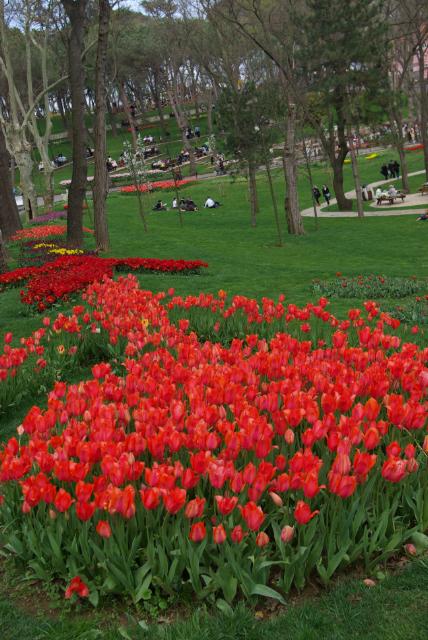 red tulips from Istanbul Tulip Festival 2010, Emirgan Park,  2010 İstanbul Lale festivali'nde Emirgan Parkından kırmızı laleler, pentax k10d