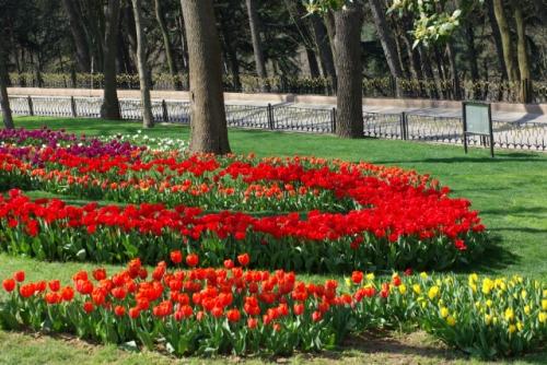 İstanbul lale festivalinden kırmızı laleler, red tulips from Istanbul Tulip Festival, Emirgan park 2010, pentax k10d