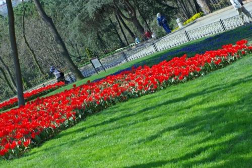 Istanbul tulip festival, Istanbul lale festivali, Emirgan park, pentax k10d