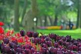 Istanbul tulip festival, Istanbul lale festivali, pentax k10d
