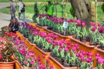 Istanbul lale festivali, Istanbul tulip festival, Emirgan-Istanbul, pentax k10d