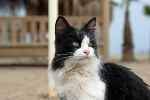 cat :), pentax k10d