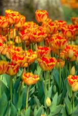 Istanbul tulip festival, Istanbul lale festivali, Istanbul, pentax k10d