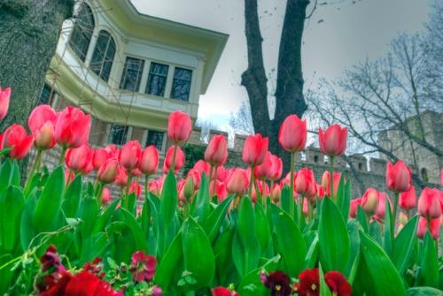 istanbul tulip festival, istanbul lale festivali 2011, Gülhane park, Istanbul, pentax k10d
