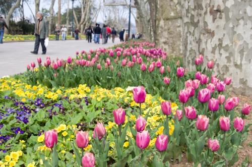 Istanbul tulip festival 2011, İstanbul lale festivali 2011, Gülhane parki, pentax kx