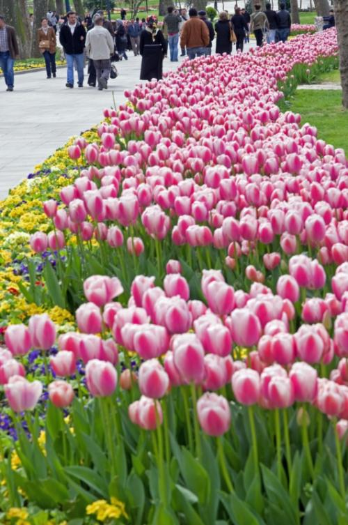 Istanbul Tulip festival, Istanbul lale festivali, Gülhane parkı, pentax kx