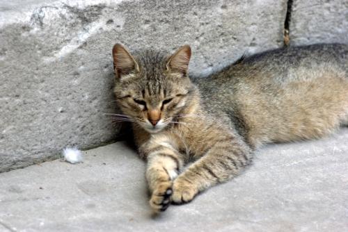 cat, pentax k10d