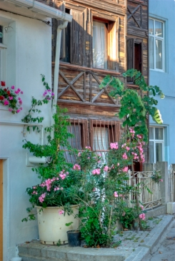 flowers and old houses