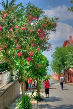istanbul_buyukada_island_2011_06_23-11