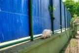 white cat is walking, büyükada , Istanbul, pentax k10d