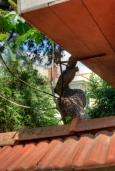 istanbul_buyukada_prince_island_2011_07_12-5