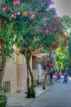 istanbul_buyukada_ozgur_ozkok_20110816-2