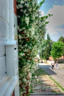 istanbul_buyukada_ozgur_ozkok_20110816-37