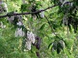 istanbul_moda_tea_garden_eleka_rugam_rebane-1