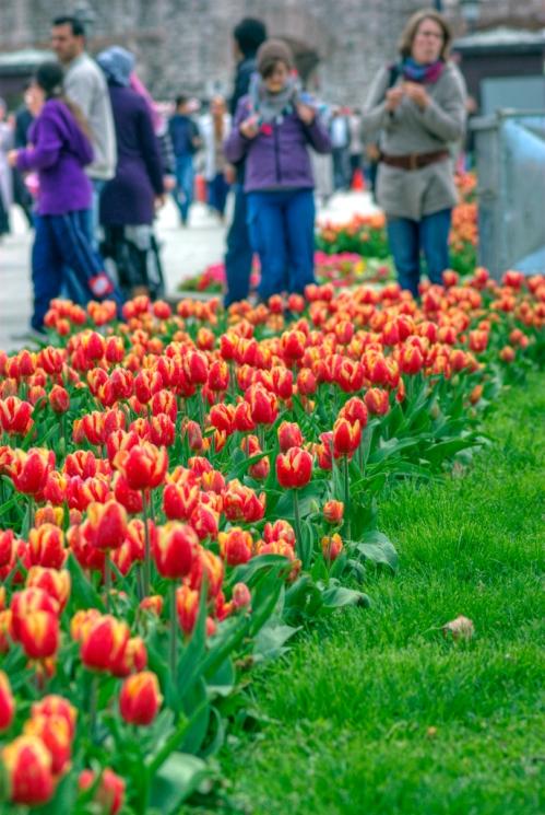 İstanbul lale festivali, Istanbul tulip festival,  Gülhane Parki, İstanbul, pentax k10d, photos by ozgur ozkok