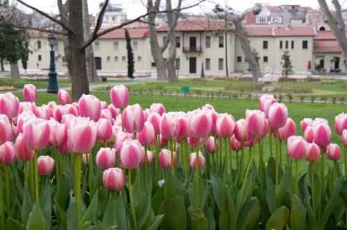İstanbul tulip festival, İstanbul lale festivali, April-2011,  Türkiye,  photos by ozgur ozkok