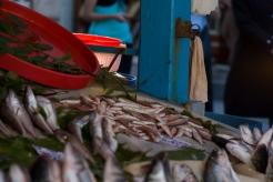 Samatya fish market, Istanbul, pentax k5, ozgur ozkok