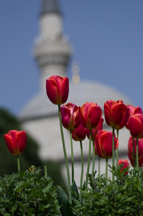 Istanbul Tulip Festival, Istanbul Lale Festivali , Sultanahmet Square, pentax k5, photos by ozgur ozkok