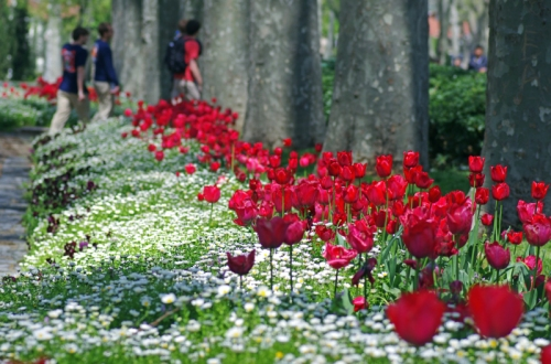 Istanbul tulip festival, Istanbul lale festivali, Gülhane park, photos by ozgur ozkok, pentax k5