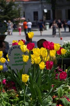istanbul_tulip_lale_festival_ozgur_ozkok-218