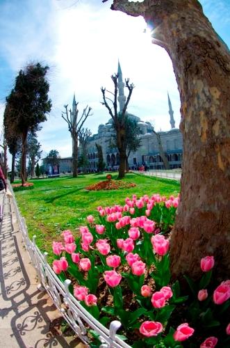 Istanbul tulip festival , Sultanahmet Mosque