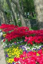 istanbul_tulip_lale_festival_ozgurozkok (11)