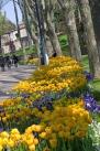 istanbul_tulip_lale_festival_ozgurozkok (12)
