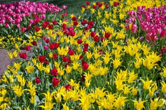 istanbul_tulip_lale_festival_ozgurozkok (16)