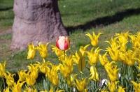istanbul_tulip_lale_festival_ozgurozkok (40)