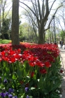 istanbul_tulip_lale_festival_ozgurozkok (48)