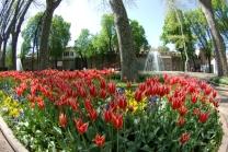 istanbul_tulip_lale_festival_ozgurozkok (71)