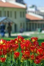 istanbul_tulip_lale_festival_ozgurozkok (74)
