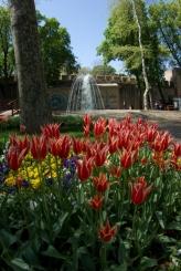 istanbul_tulip_lale_festival_ozgurozkok (75)