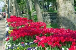 istanbul_tulip_lale_festival_ozgurozkok (8)