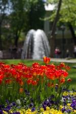 istanbul_tulip_lale_festival_ozgurozkok (81)