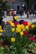 istanbul_tulip_lale_festival_ozgurozkok (84)