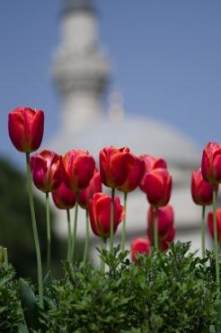 istanbul_tulip_lale_festival_ozgurozkok (89)