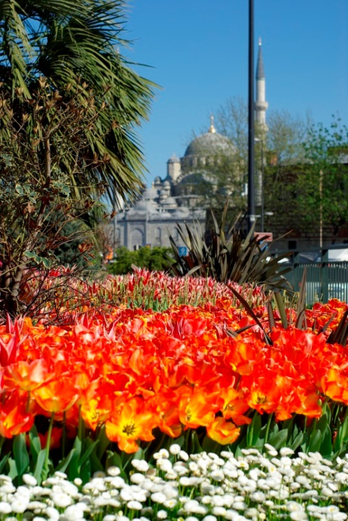 Istanbul Tulip Festival 2013, New Mosque, Istanbul, photos by ozgur ozkok